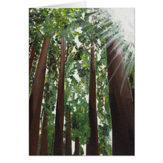 """California Redwoods"" Card from Canvas Justice"