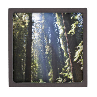 California Redwoods Jewelry Box