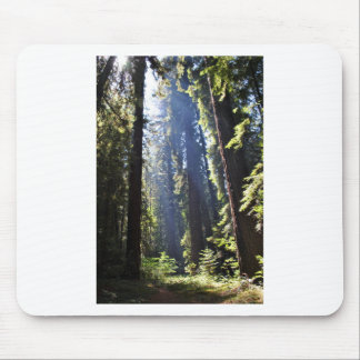 California Redwoods Mouse Pad