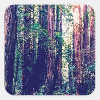 California Redwoods Square Sticker