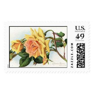 California Roses Flowers c1915 Vintage Stamp