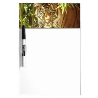 California, San Francisco Zoo, Sumatran Tiger Dry-Erase Board
