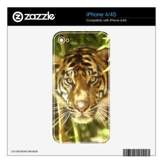California, San Francisco Zoo, Sumatran Tiger Decals For The iPhone 4