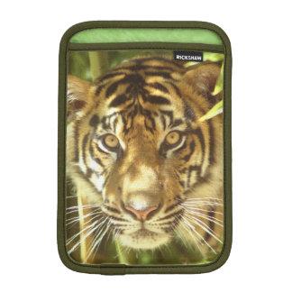 California, San Francisco Zoo, Sumatran Tiger Sleeve For iPad Mini