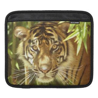 California, San Francisco Zoo, Sumatran Tiger Sleeve For iPads