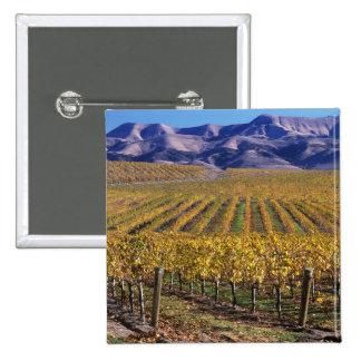 California, San Luis Obispo County, Edna Valley Pins