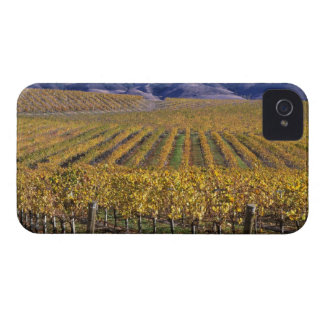 California, San Luis Obispo County, Edna Valley Blackberry Bold Case