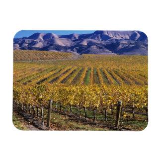 California, San Luis Obispo County, Edna Valley Rectangle Magnet