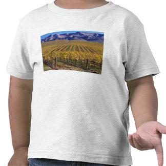 California, San Luis Obispo County, Edna Valley Shirts