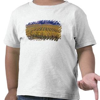 California, San Luis Obispo County, Edna Valley Tee Shirt