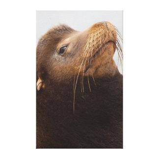 California Sea Lion 2 Canvas Print