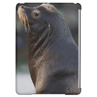 California Sea Lion 2 iPad Air Covers