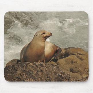 California Sea Lion Animal Wildlife Ocean Mouse Pad