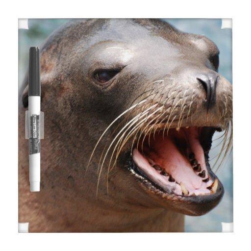 California Sea Lion Dry Erase Board