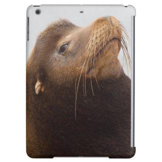 California Sea Lion iPad Air Covers