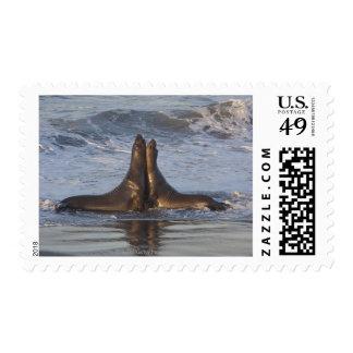 California Sea Lion Postage