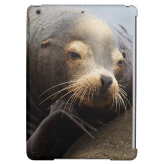 California Sea Lion Resting Case For iPad Air