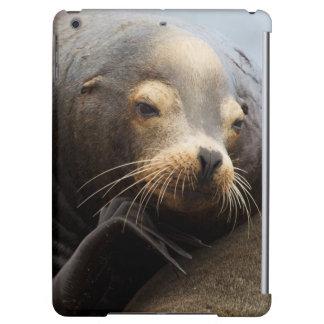 California Sea Lion Resting Case For iPad Air