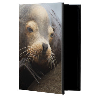 California Sea Lion Resting Cover For iPad Air