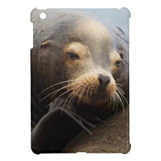 California Sea Lion Resting iPad Mini Covers