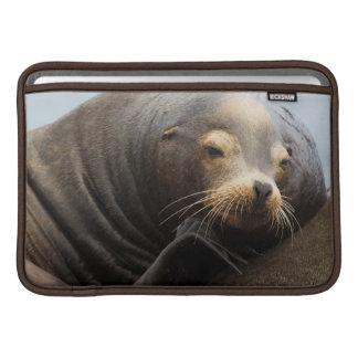 California Sea Lion Resting MacBook Sleeve