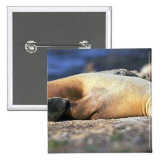 California Sea Lion Sleeping Pin