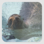 California Sea Lion Square Sticker