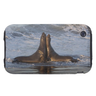 California Sea Lion Tough iPhone 3 Covers