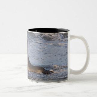 California Sea Lion Two-Tone Coffee Mug
