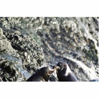 California Sea Lions Photo Cut Outs