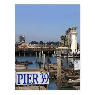 California Sea Lions Postcard