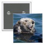 California Sea Otter Enhydra lutris) grooms 2 Pinback Buttons