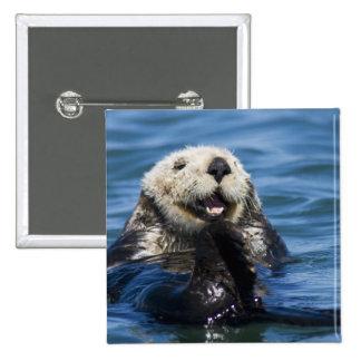 California Sea Otter Enhydra lutris) grooms 2 Inch Square Button