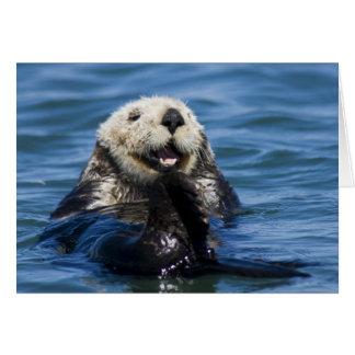 California Sea Otter Enhydra lutris) grooms Card