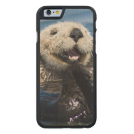 California Sea Otter Enhydra lutris) grooms Carved® Maple iPhone 6 Case