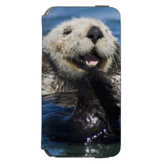 California Sea Otter Enhydra lutris) grooms iPhone 6/6s Wallet Case