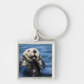 California Sea Otter Enhydra lutris) grooms Keychain