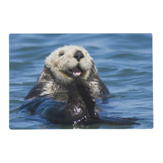 California Sea Otter Enhydra lutris) grooms Laminated Place Mat