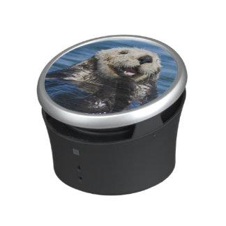 California Sea Otter Enhydra lutris) grooms Bluetooth Speaker