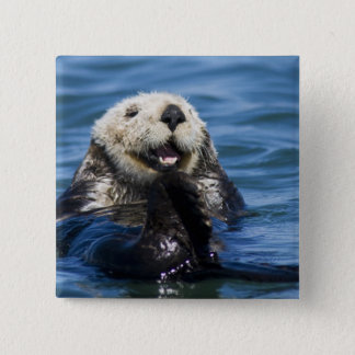 California Sea Otter Enhydra lutris) grooms Pinback Button