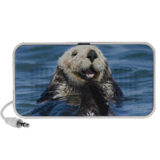 California Sea Otter Enhydra lutris) grooms Travelling Speaker