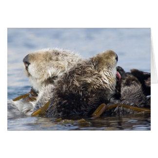 California Sea Otters Card