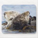 California Sea Otters Mouse Pad