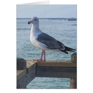 California Seagull Greeting Card