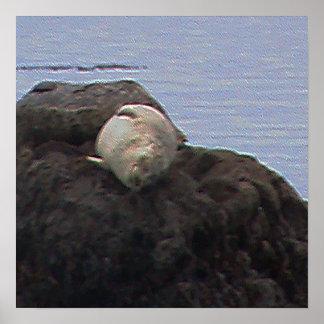 California Seal Nap Print