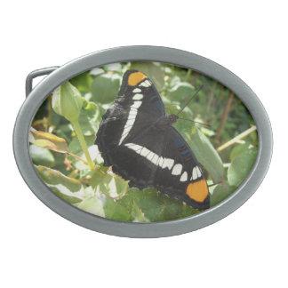 California sister butterfly Belt buckle
