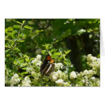 California Sister Butterfly Card