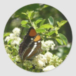 California Sister Butterfly in Yosemite Classic Round Sticker