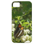 California Sister Butterfly in Yosemite iPhone SE/5/5s Case
