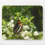 California Sister Butterfly in Yosemite Mouse Pad